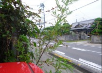 JA松山市永田出張所前